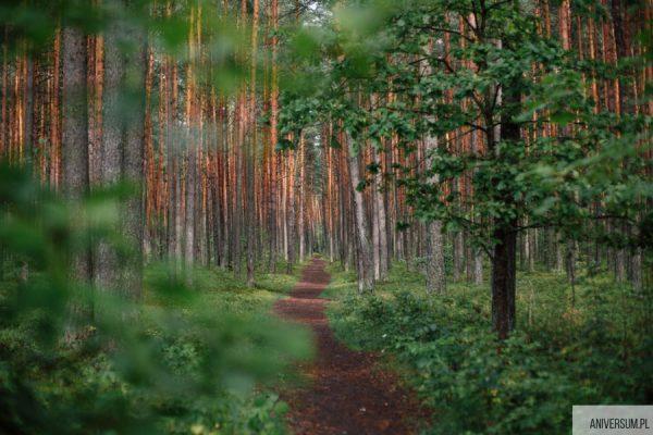 Drzewo rodowe bez korzeni